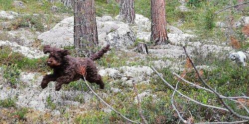 Lesja og Dovre Hundepark  Trening i trygge omgivelser